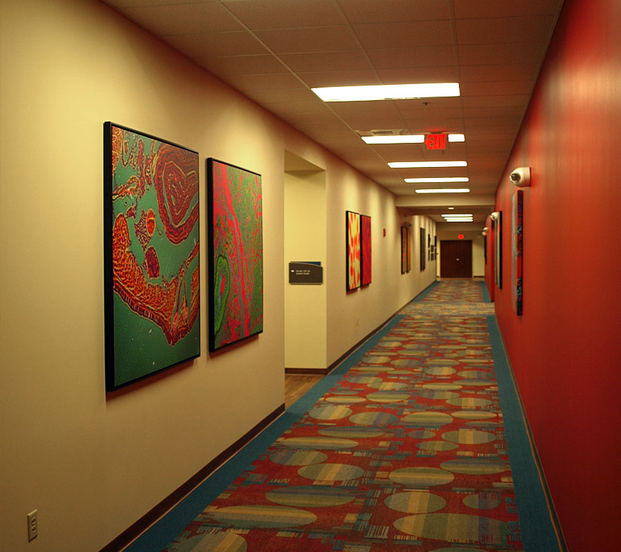 Centra Health College of Nursing hallway